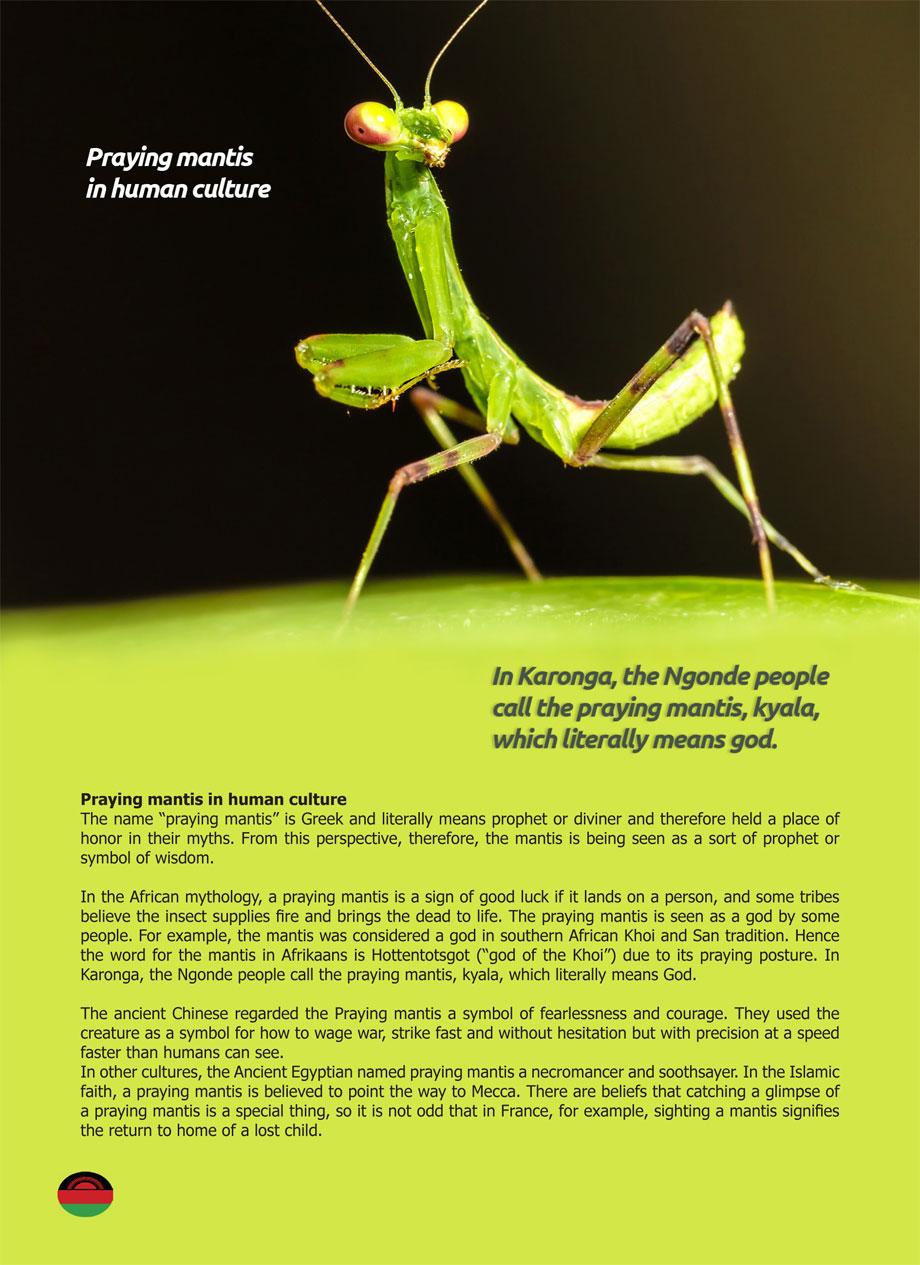 Praying Mantis Inside Guide To Malawi